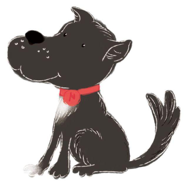 nelson dog sitting